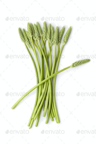 Wild green asparagus