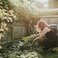 Woman planting vegetable in small home garden