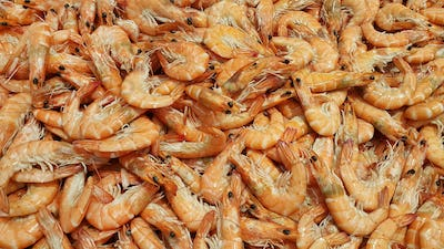 Raw fresh shrimp at the counter in the store