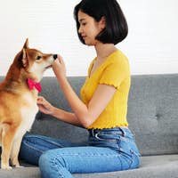 Happy woman and shiba inu dog sitting together on a sofa at home