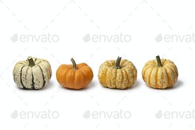Variety of baby pumpkins