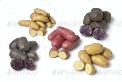 Variety of heirloom potatoes