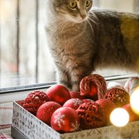 A gray cat is sitting by the window next to red Christmas toys. Cozy new year.