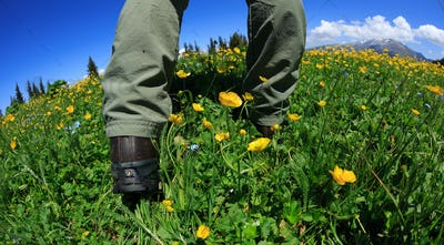 Hiker legs enjoy the view on flower and grass mountain peak