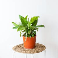 Concept of home plants, interior decoration with green plants.