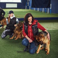 Gorgeous dogs and tree instructors during the training session