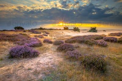 Hoge Veluwe Sand dune Heathland