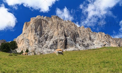 pasture beneath Sassolungo mount