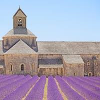 Senanque Abbey blooming lavender flowers detail. Gordes, Luberon, Provence, France.