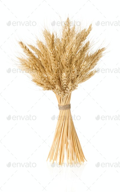 ears of barley  isolated on white