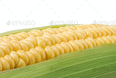 ripe yellow corn on white