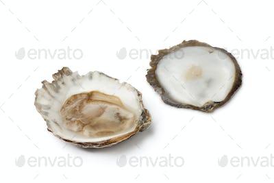 Open European flat oyster