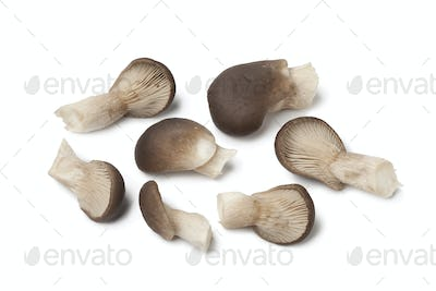 Common oyster mushrooms