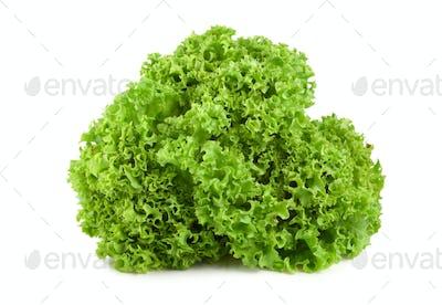 Bush lettuce isolated