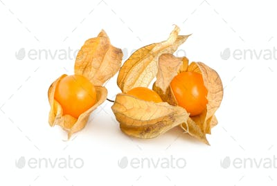 Physalis isolated