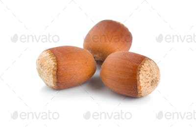 Three ripe hazelnuts