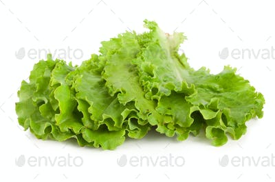 Leaves lettuce