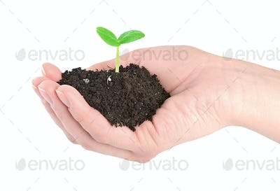 Human hands and young green plant