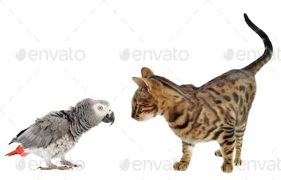 scaring Parrot and cat