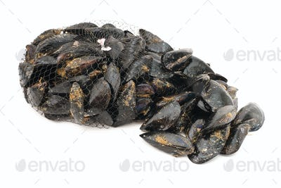 mussels over white