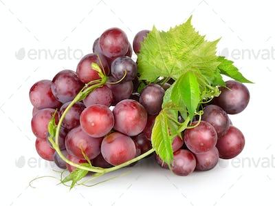 Dark blue grapes with a vine