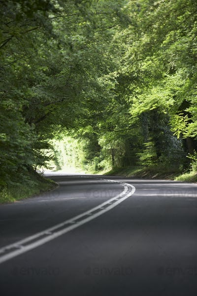Country Road Lined By Large Green Trees