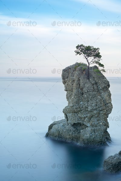 Portofino park. Pine tree rock.Long exposure. Liguria, Italy