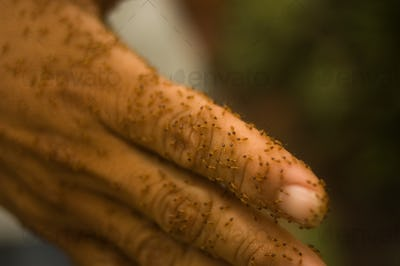 Hand covered in termites