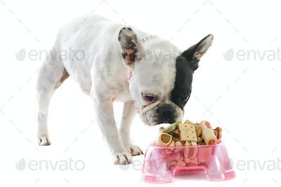 french bulldog and pet food