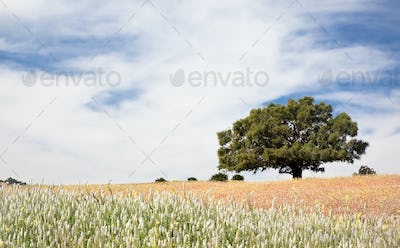 Lonely tree at the top of a hill