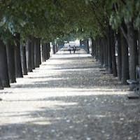 Tree Lined Boulevard,Paris,France