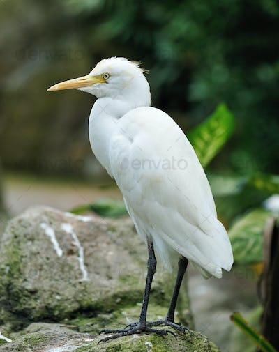 Stork bird