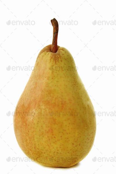 guyot pear