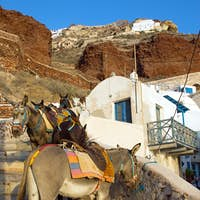 Mules waiting in Ammoudi