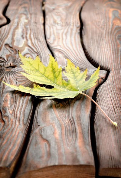 Autumn leaf on a wooden table