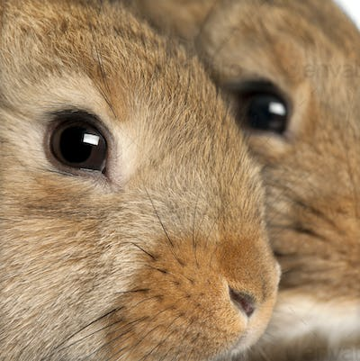 Close-up of two rabbits heads