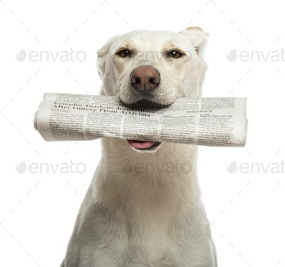 Portrait of Crossbreed dog holding newspaper in its mouth against white background