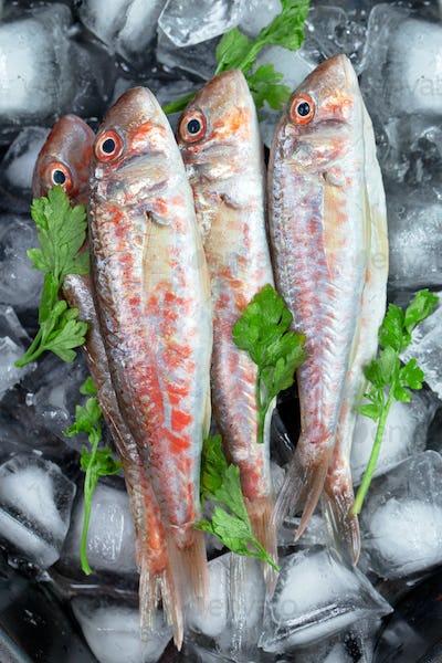 Fresh fish (Mullus barbatus ponticus)