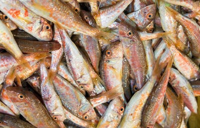 Red mullet fish