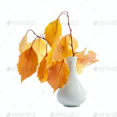 Branches with autumn yellow leaves in the vase