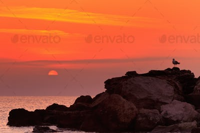 sunrise on a rocky shore