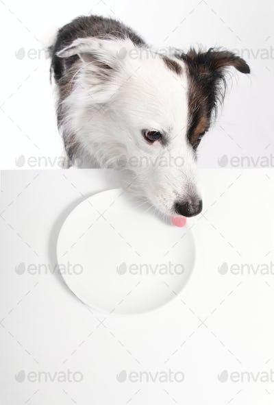 dog with plate