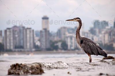 Heron In front of City Skyline