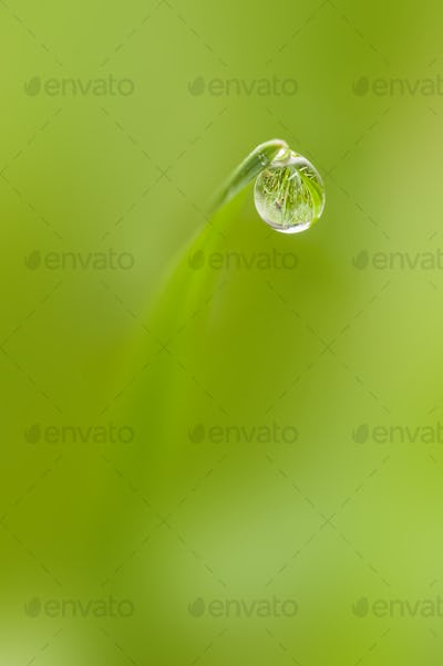 Dew drop on tip of a blade of grass in Winter