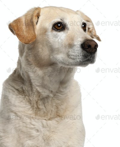 Close-up of Mixed-breed dog, 12 years old, in front of white background