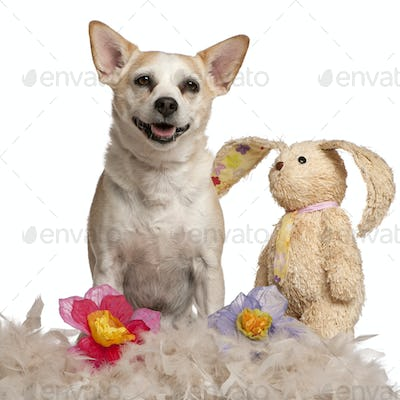 Mixed-breed dog, 8 years old, sitting with stuffed animal and flowers in front of white background