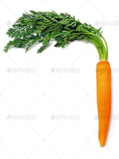 A Fresh Carrot