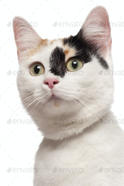 Close-up of Mixed-breed cat, 2 years old, in front of white background