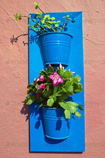 Flower pots on a wall