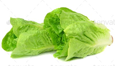 Two Heads of Lettuce